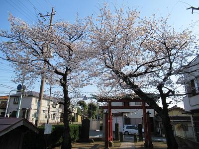 花見ブログ1.png